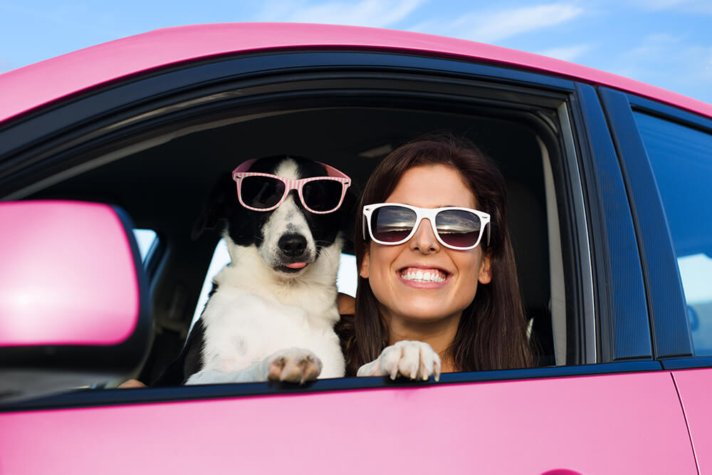 Tips for a Safe Road Trip with Your Pet